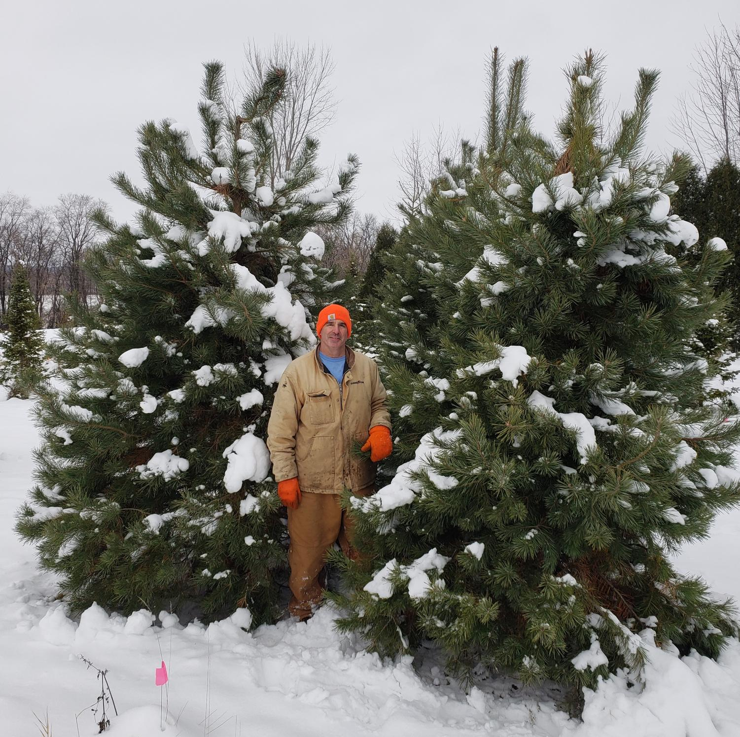 Mr. Tikalsky shows off some of his best trees.