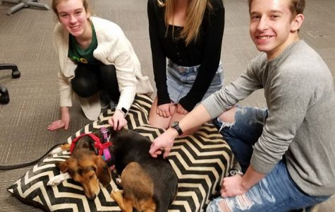 Therapy dogs help students cope with finals