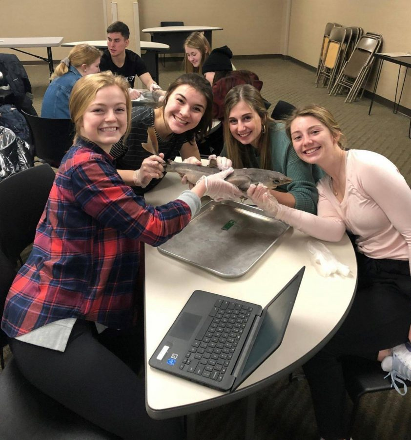 MARS Healthcare II students Kate Seymour, Emily Russo, Kenzie Vycital and Kaidyn Mulvihill show off the pregnant dogfish shark they are about to dissect.
